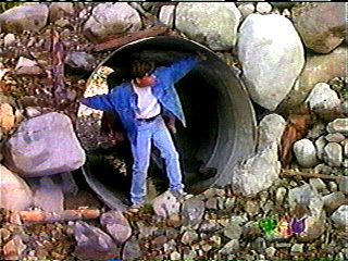 Jay peers out of a tunnel to see if it is safe